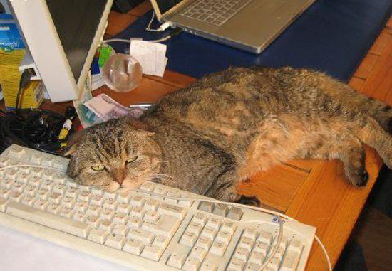 Уснувшие за работой