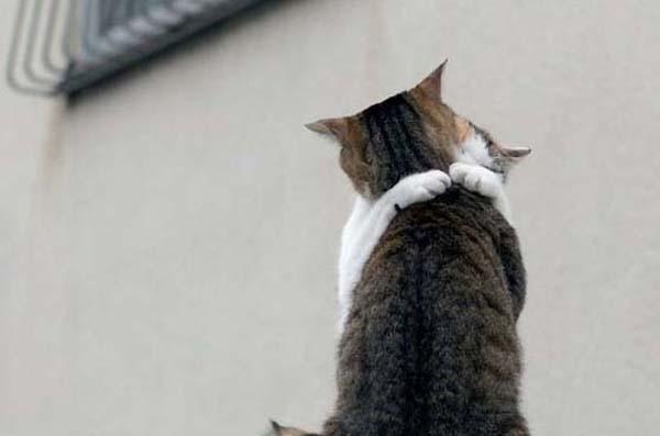 Настало время мартовских котов