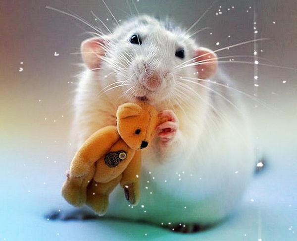 Мимишная открытка к Новому году крысы 2020
