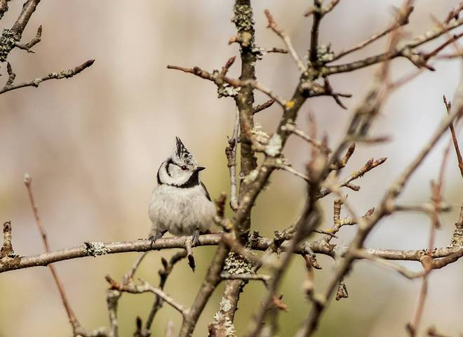 птахи в Чорнобильській зоні