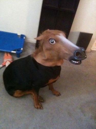 Лошада