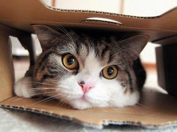Распродажа котиков