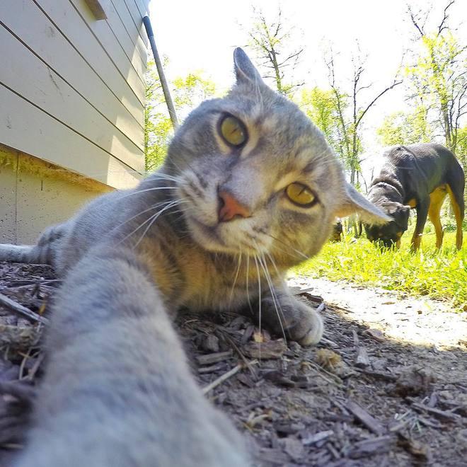 Котик обожает делать селфи