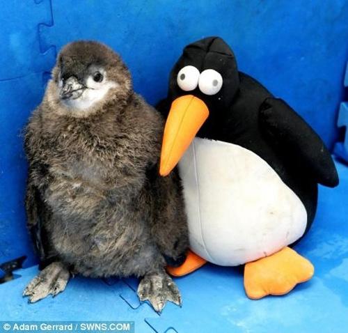 Животные и их игрушечные копии -2