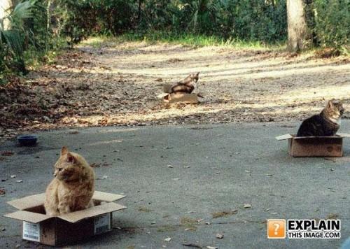 Ржачные коты