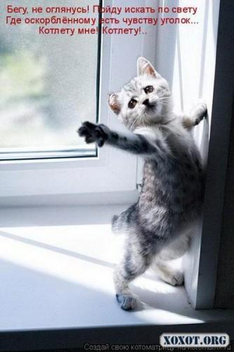 Коты:))))