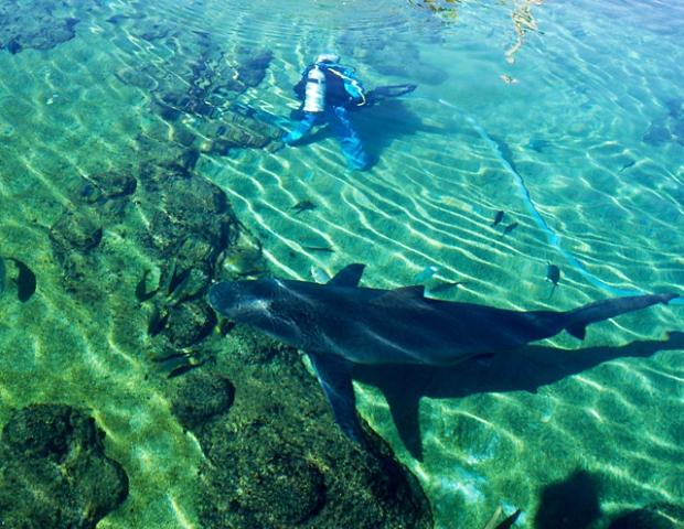 Дайвінг з акулами