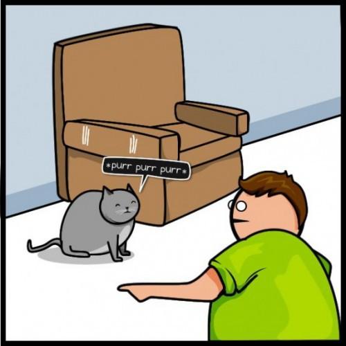 Коты всегда добиваются своего