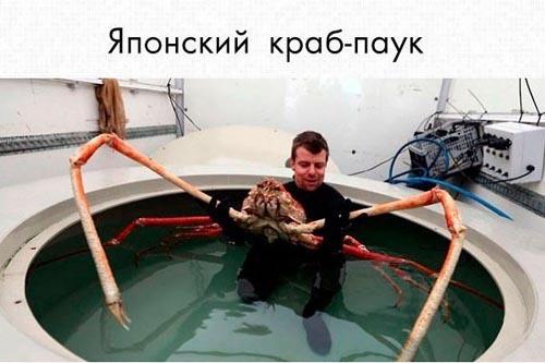Животные, о которых вы не знали
