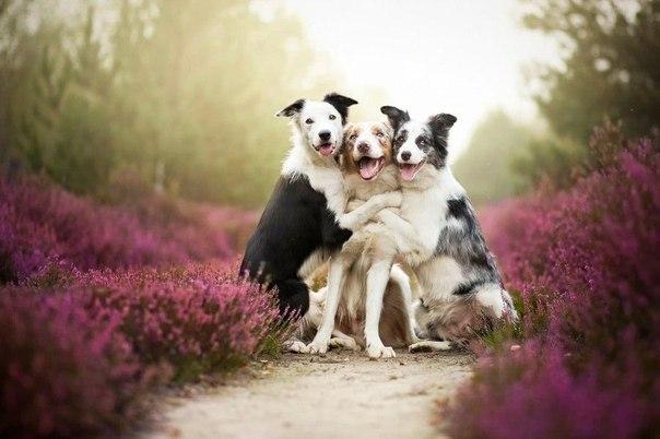 Бесподобные снимки собак от Алисии Змысловски