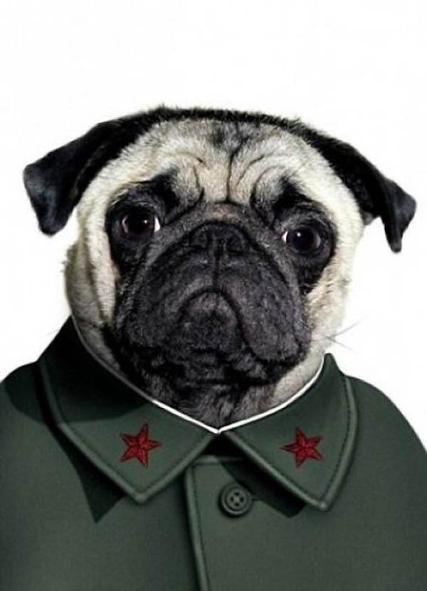 Собаки в образе знаменитостей (Ч.2)