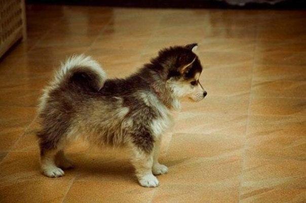 10 видов необыкновенных скрещенных собак
