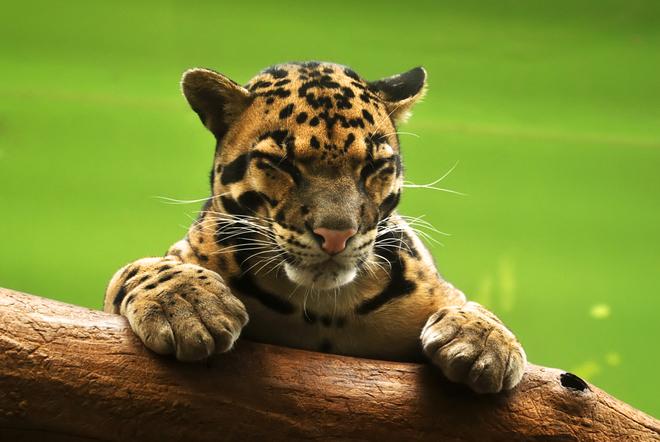 Отдых с детьми: лучшие зоопарки Европы