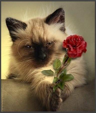 Цветочек с любовью