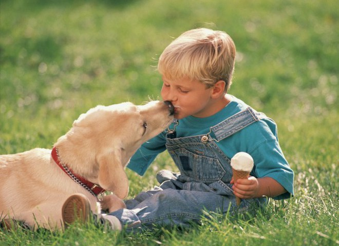 У лондонских собак есть свое мороженое!