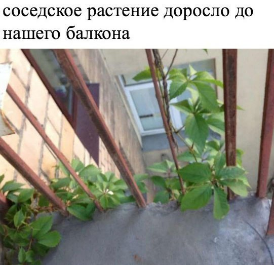 Романтическая переписка соседей
