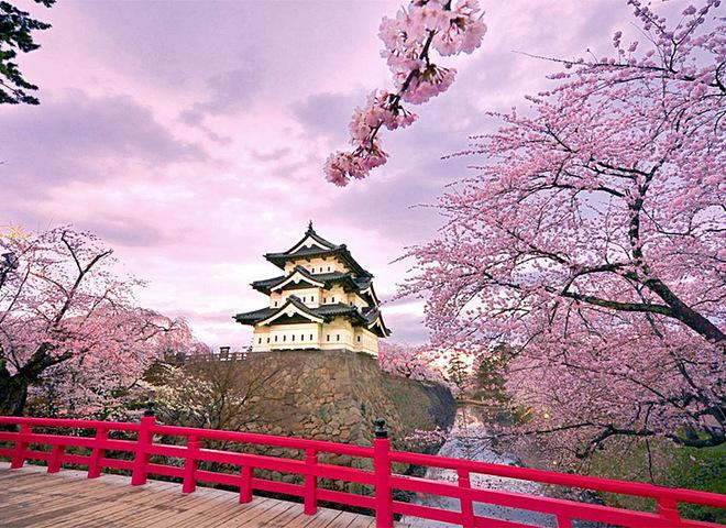 Цвітіння сакури