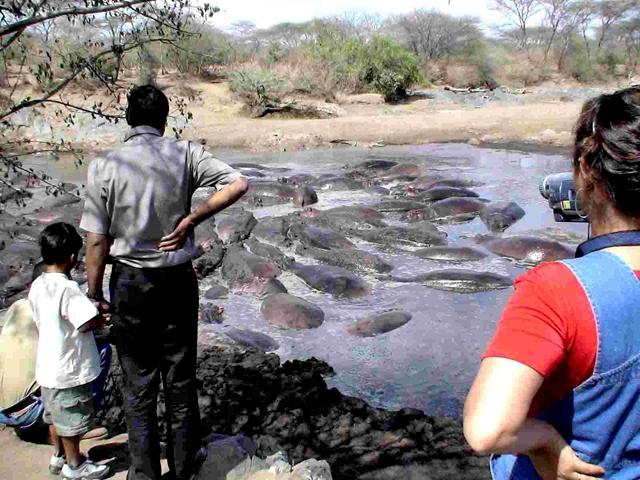 Небезпечні місця. South Luangwa National Park, Замбія