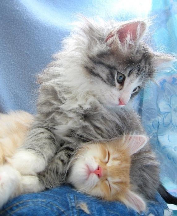 Пушистые котэ-няшки