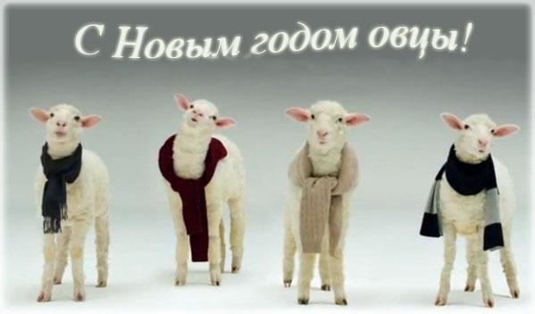 С Новым годом овцы!