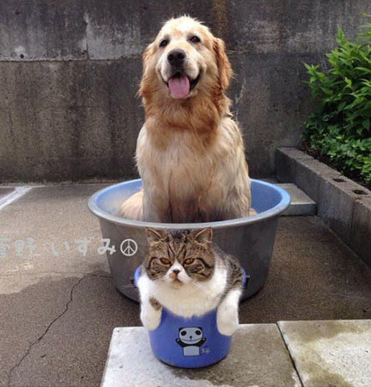 Лучшие друзья: Пес Оливер и кот Араши