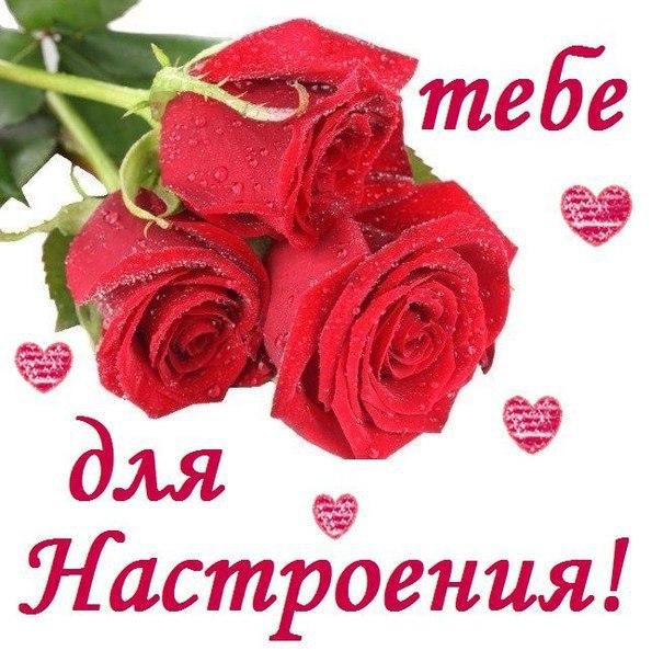 Красивые розы для настроения