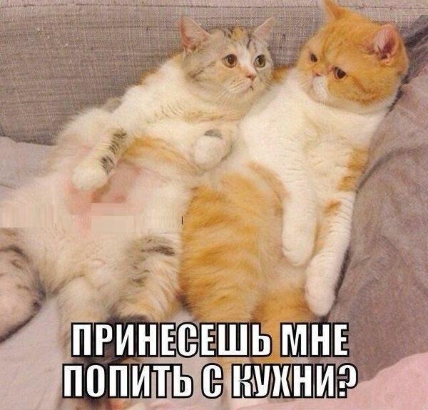 Милый, принесёшь попить?