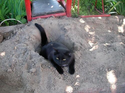 Котики и не только