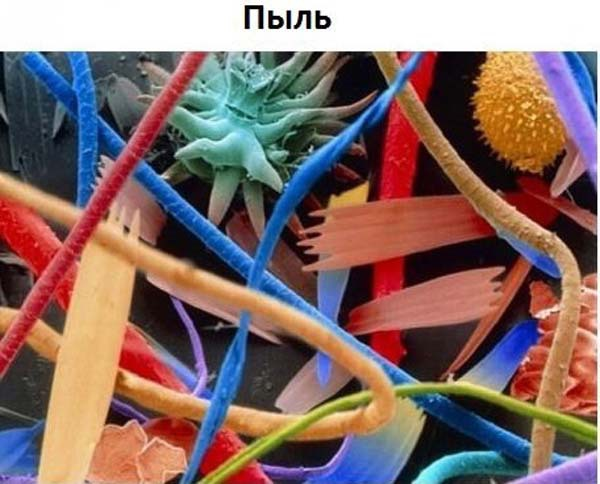 """Интересная подборка """"Жизнь под микроскопом"""""""