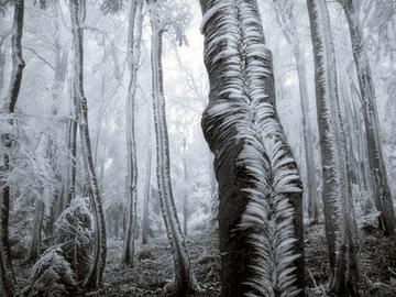 7 містичних лісів, від яких перехопить подих в 2016