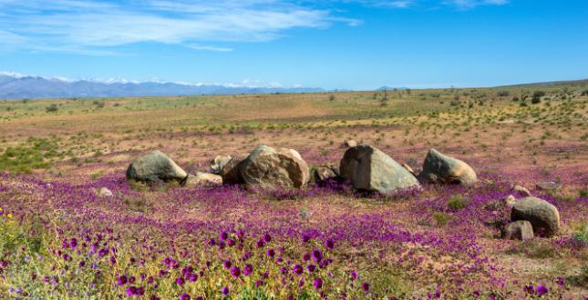 Живые камни, ледяные волосы и многое другое: 15 невероятных феноменов природы