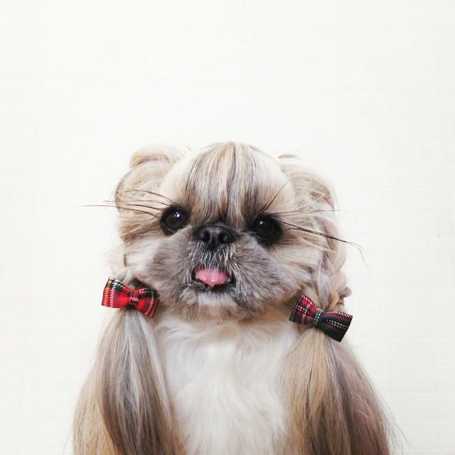 Кума - найстильніша собака