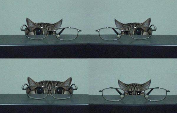 Кот + очки =...