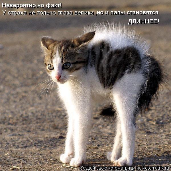 Фотоприколы про котэ