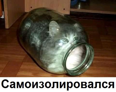 Котик на карантине