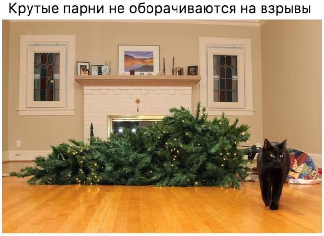 Крутые парни и елка