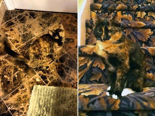 Внимание! Найди кота на фото
