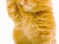 Киця, з днюхою тебе