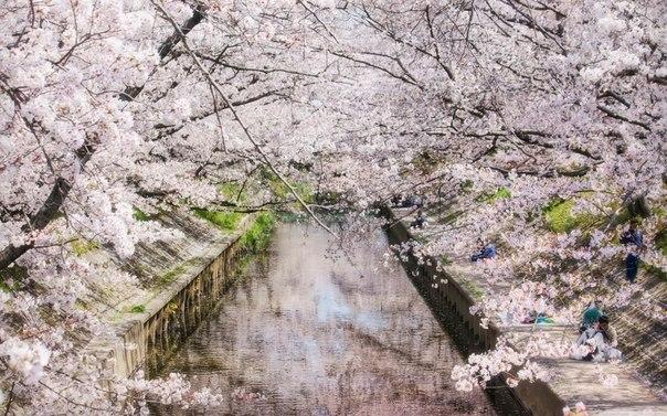 Нереальная красота в Японии