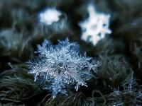 Снежинка на ветке