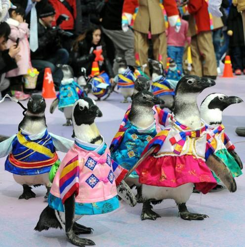 пингвиниан-фэшн-вик