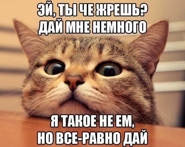 Прикольный мем с котом