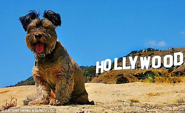 Тварини-мандрівники: собака Оскар