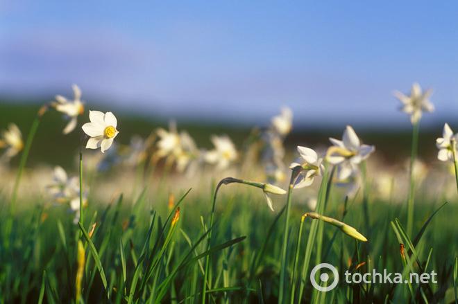 Топ-5 живописных мест Украины, которые стоит посетить весной