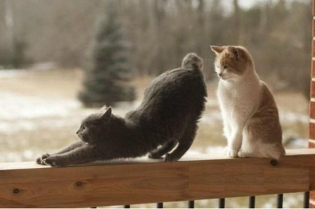 Забавные приколы про котов