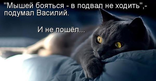 Милые котоматрицы