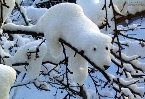 Снежный Умка