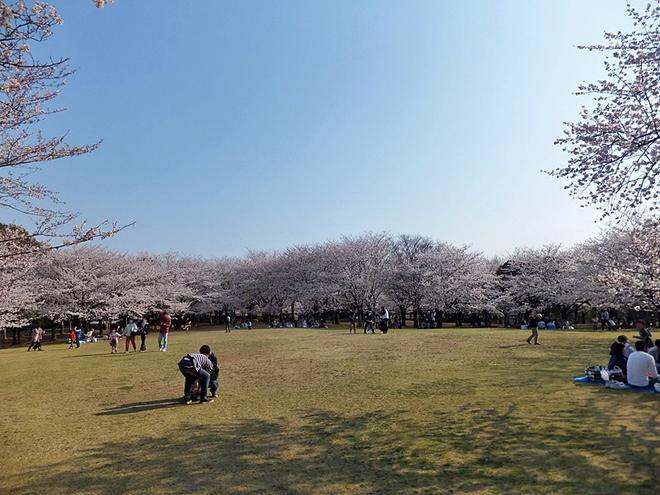 Фестивали марта