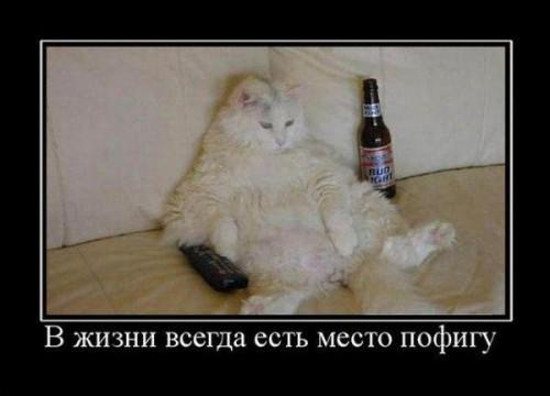 Демотиваторы про котов