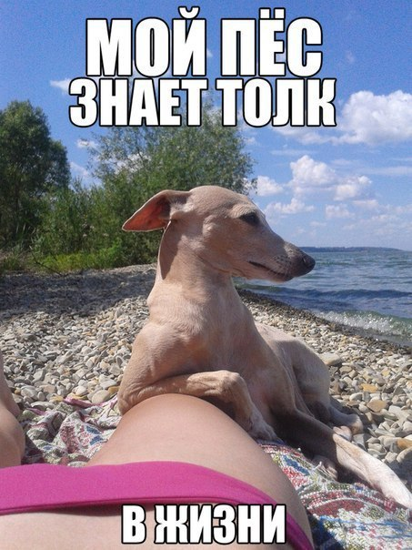 Прикольная фотка с чётким псом